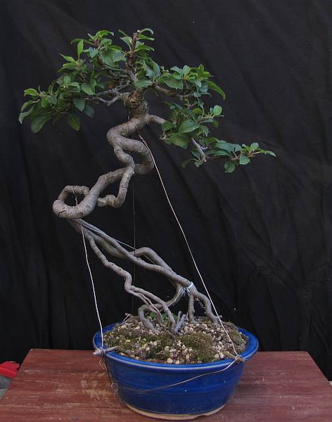 Rdb45 realiserunebouture - Comment faire un bonsai ...