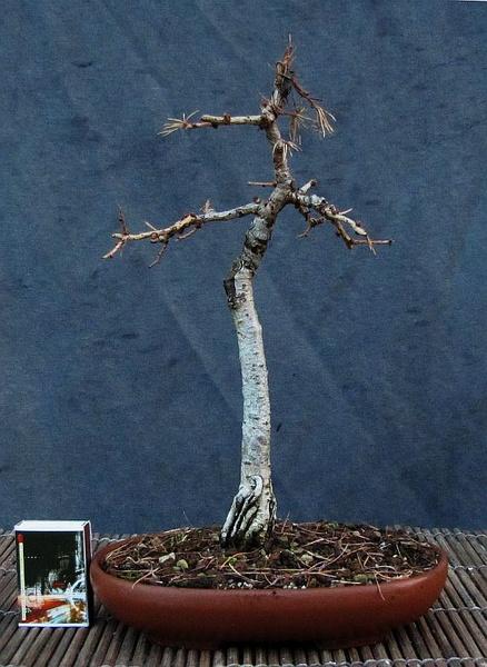 http://krizic.eu/bonsai/photos/_data/i/upload/2016/12/19/20161219113157-95b110d2-me.jpg
