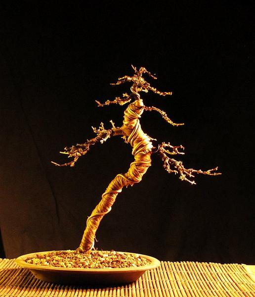 http://krizic.eu/bonsai/photos/_data/i/upload/2017/03/06/20170306223236-cb0198d4-me.jpg