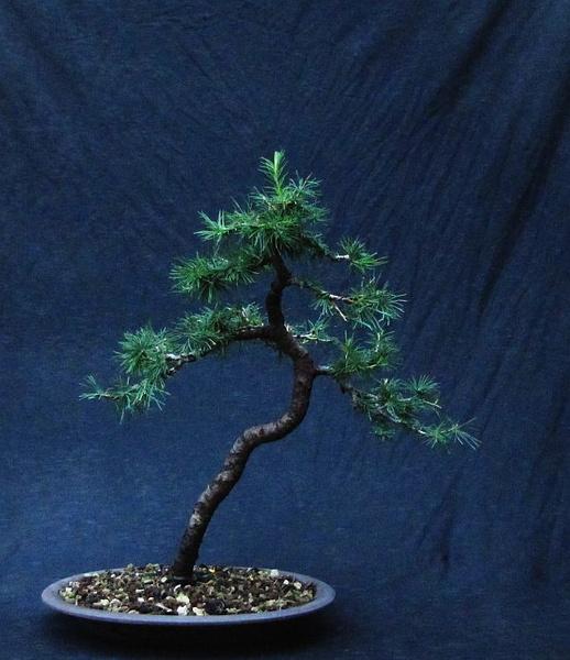 http://krizic.eu/bonsai/photos/_data/i/upload/2017/06/30/20170630220612-aa77ef52-me.jpg